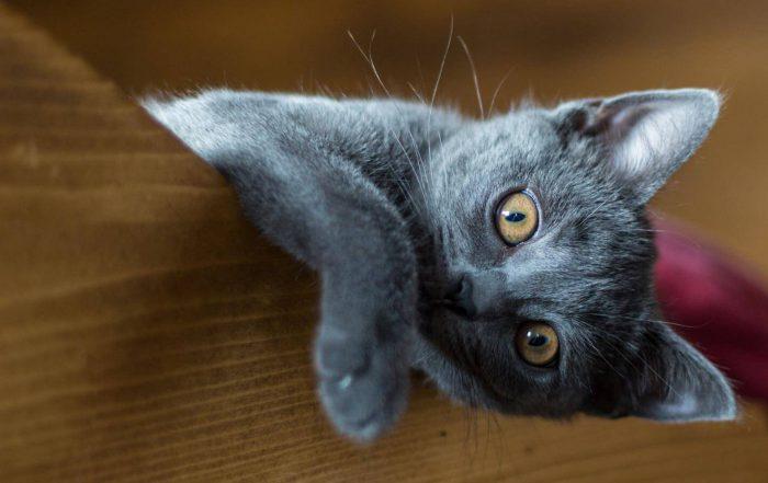 czym-sa-siatki-dla-kotow