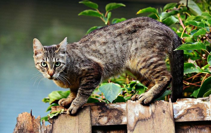 jak-zabezpieczyc-balkon-dla-kota