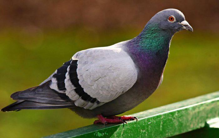 jak-zabezpieczyc-balkon-przed-golebiami