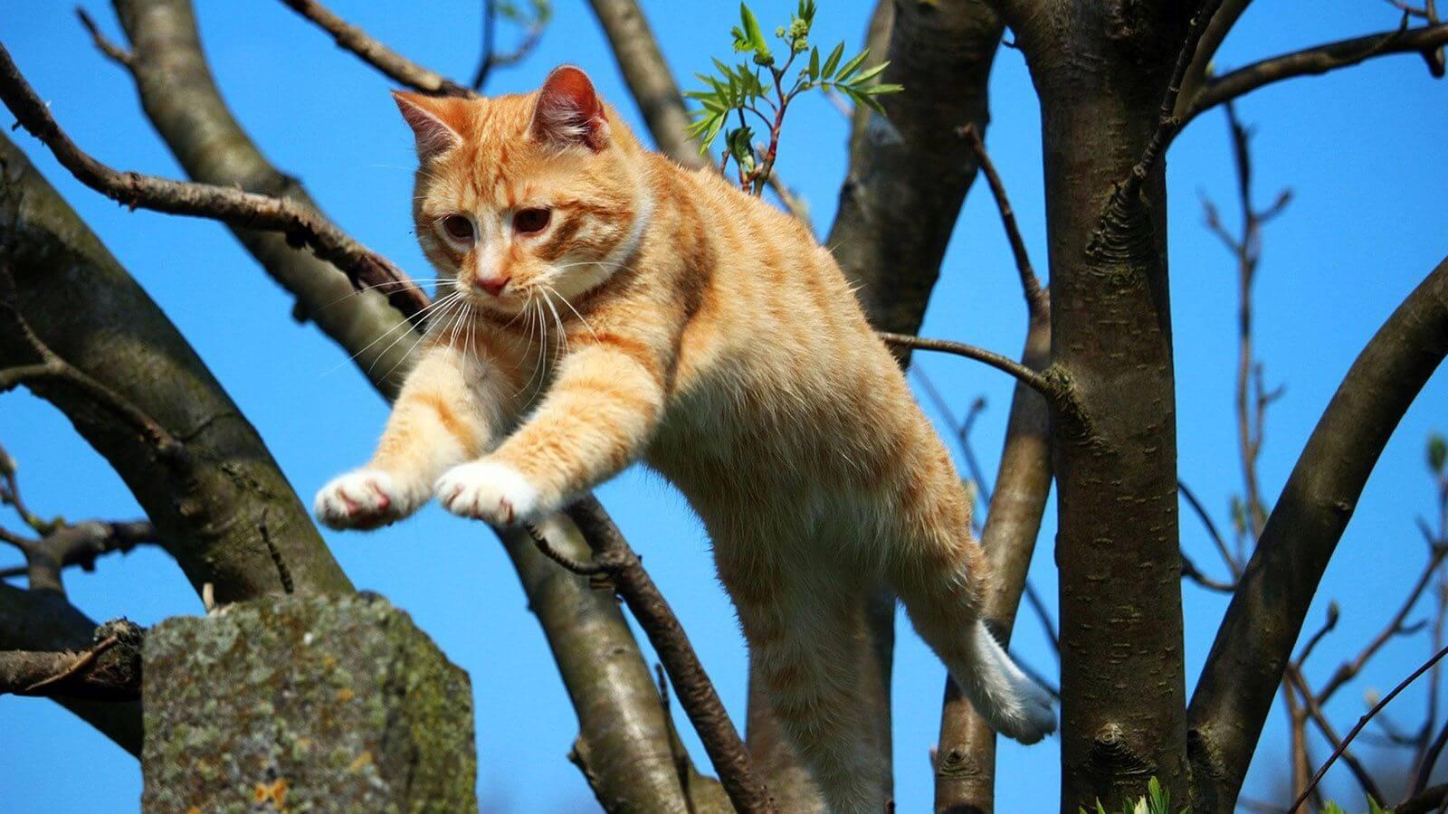 czym-moze-skonczyc-sie-upadek-kota-ze-sporej-wysokosci