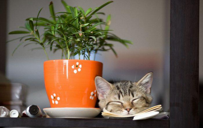 rosliny-trujace-dla-kotow