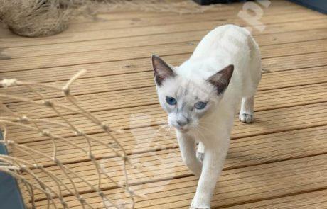 zdjęcia z kotami (10)