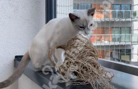 zdjęcia z kotami (1)