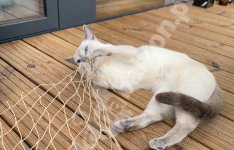 zdjęcia z kotami (2)
