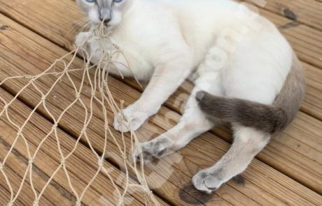 zdjęcia z kotami (3)