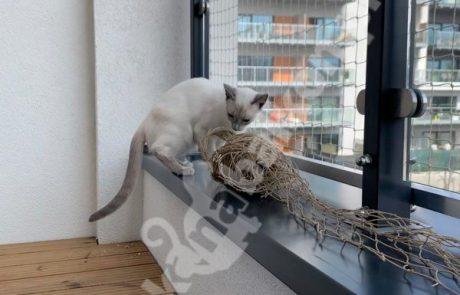 zdjęcia z kotami (5)