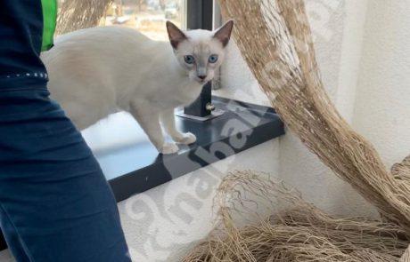 zdjęcia z kotami (6)