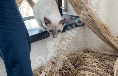 zdjęcia z kotami (7)