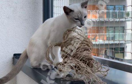 zdjęcia z kotami (8)