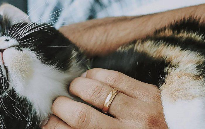 kim-jest-cat-sitter