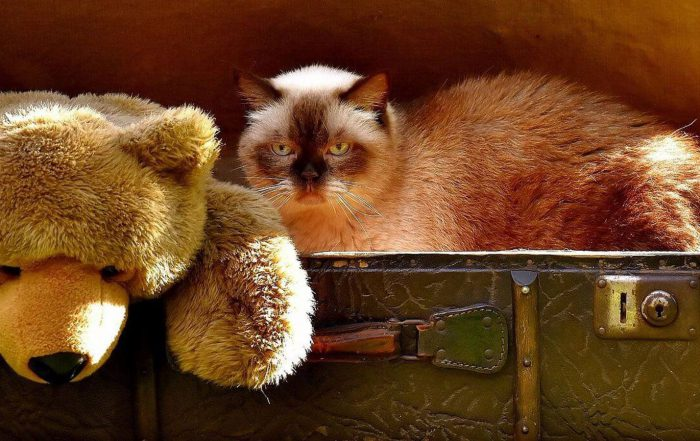 koty-a-chowanie-sie-w-ciasnych-miejscach